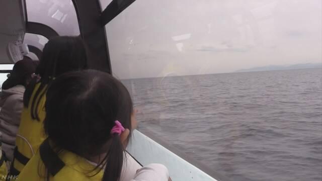 船からイルカを見るツアー 今年はイルカにたくさん会えた