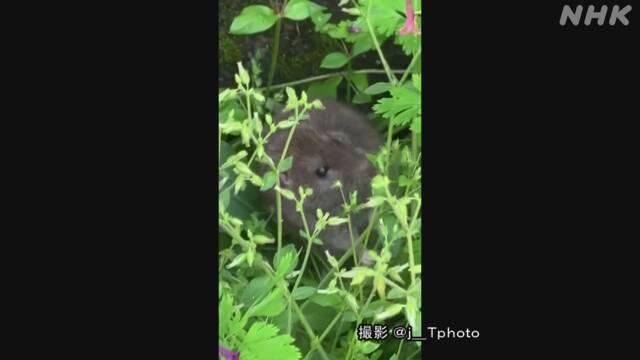 ウイルス ネズミ