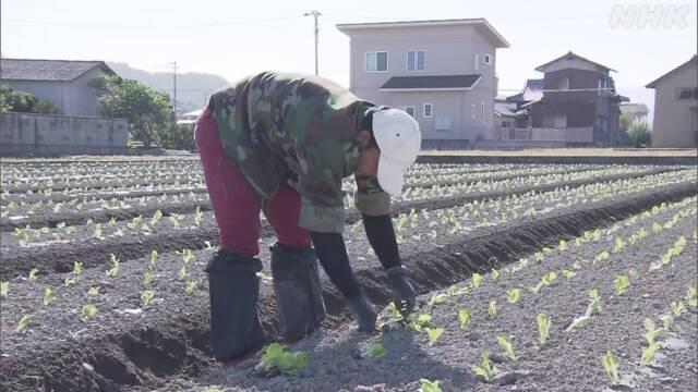 カンボジアからの技能実習生 入国制限緩和で来日し作業 香川 | NHKニュース