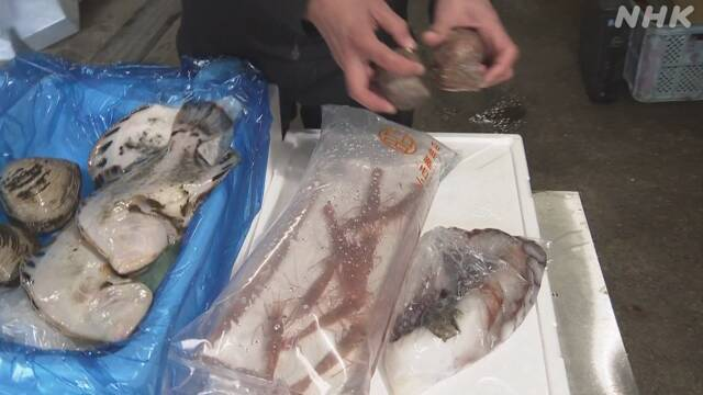 新幹線で北海道の新鮮な魚介類を首都圏に JRなど
