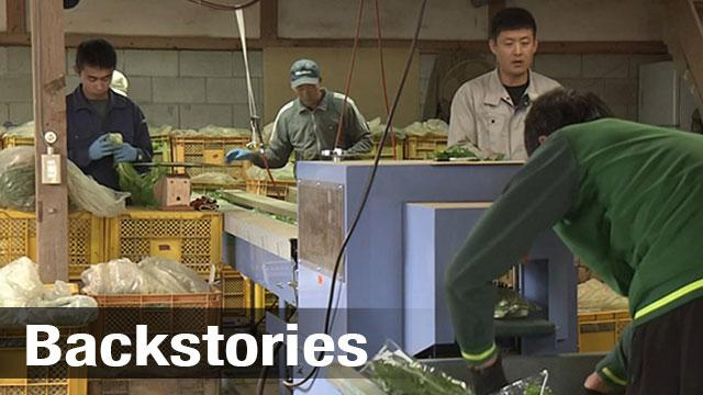 What's at stake: inside Shinzo Abe's efforts to bring more foreign workers into Japan