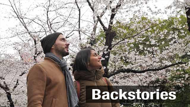 Foreign tourists find cherry blossom viewing spots far from central Tokyo