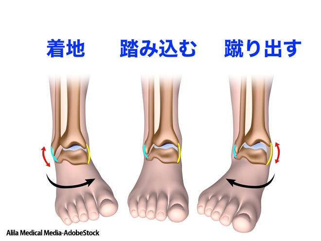 膝 の 裏 伸ばす と 痛い